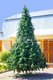 Рублевская (сосна), 7 метров