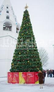 Уральская (сосна), 17 метров
