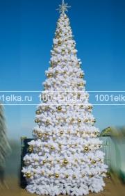 Уральская (сосна), 10 метров